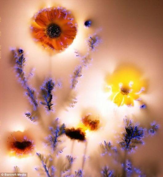 Beautiful Luminous, Electric Flowers