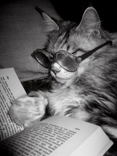 Some Animals Are Intelligent