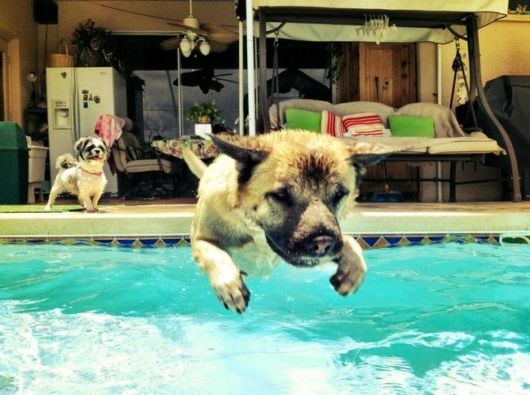 Animals Making Most Of Summer At The Pool