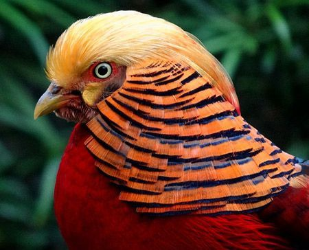 Most Amazing Exotic Birds