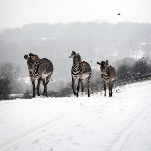 Animals In The Winters