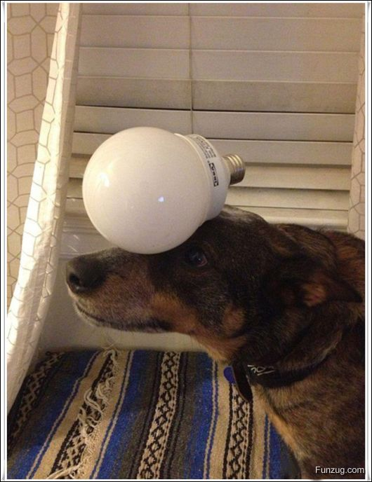 Dog With An Excellent Sense Of Balance