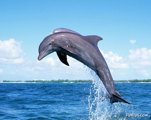 Dolphin Dance Amazing Pictures