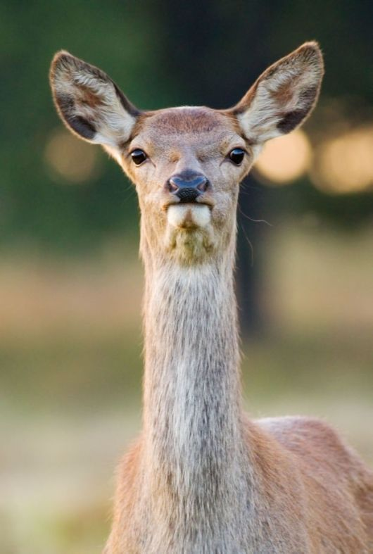 Stunning Photos Of The Red Deer Of Richmond Park