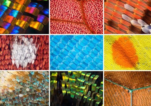 Stunning Macro Photographs Of Butterfly Wings
