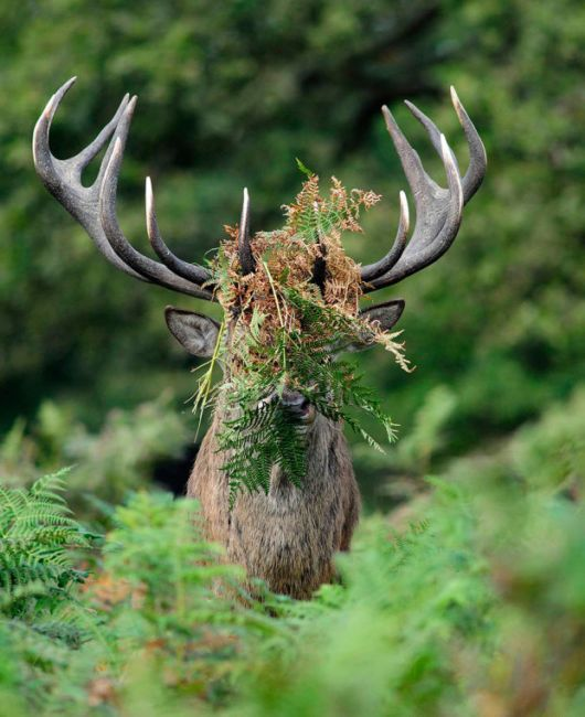 The Winners Of Annual Comedy Wildlife Photography Awards