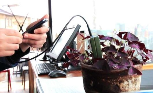 Amazing E-Kaia Will Charge Your Gadgets Via Plants